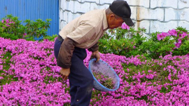 mr mrs kuroki planting