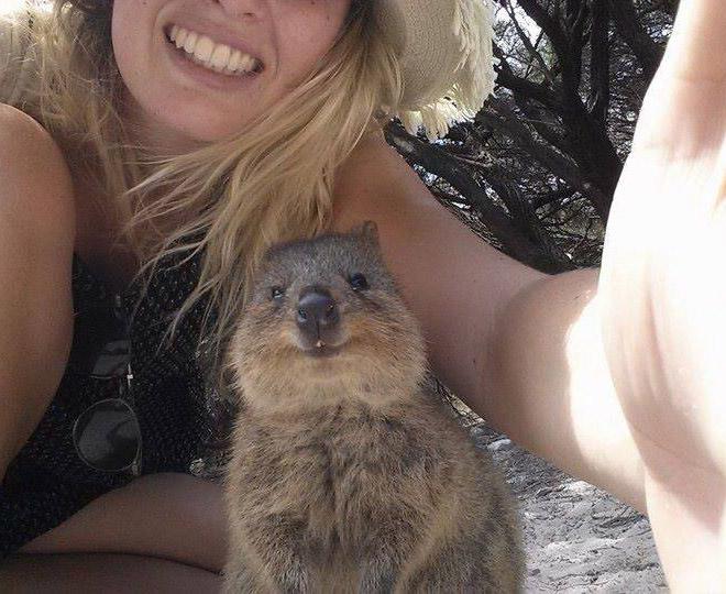 quokka selfie cutest